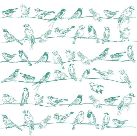 pajaritos en un arbol: Aves sin fisuras de fondo - para el dise�o y libro de recuerdos