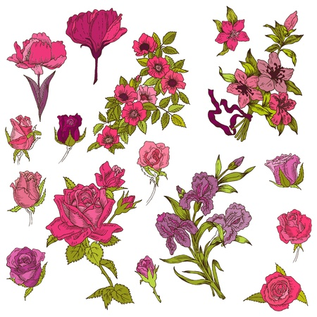 botanical drawing: Detailed Hand Drawn Flowers - for scrapbook and design in vector