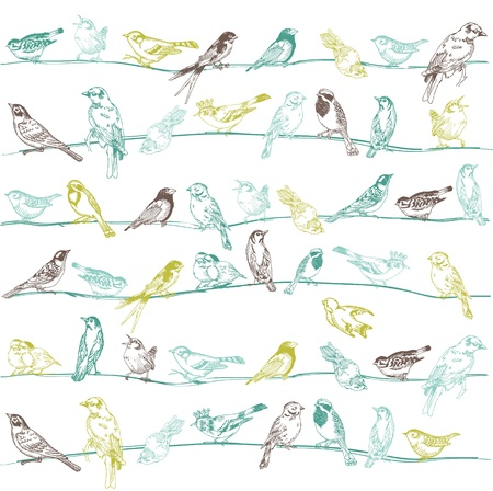 birds on a wire: Birds Seamless Background - for design and scrapbook - in vector