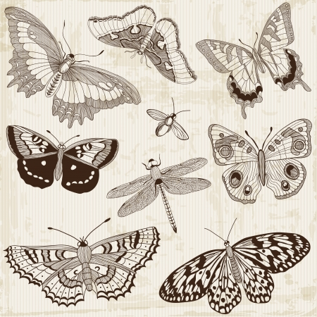 Vector Set: Calligraphic Butterfly Design Elements and Page Decoration Vector