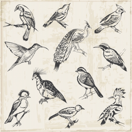 Hand drawn Birds - for design and scrapbook Vector