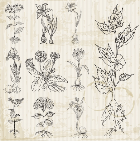 botanical drawing: Set of Vintage Flowers - hand drawn