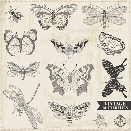 dragonfly wing: Vector Set: Calligraphic Hand drawn Butterflies - for design and scrapbook - in vector Illustration