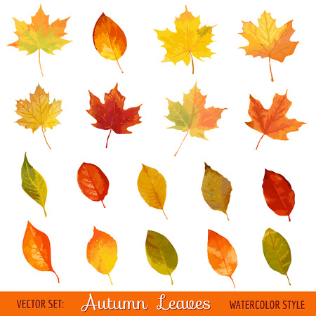dry leaf: Vector Set: Colorful Autumn Leaves - in Watercolor Style