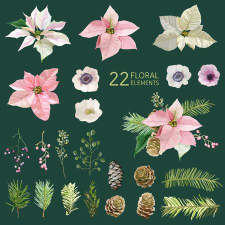 flor de pascua: Poinsettia Flores y Navidad - en el estilo de la acuarela - vector Vectores