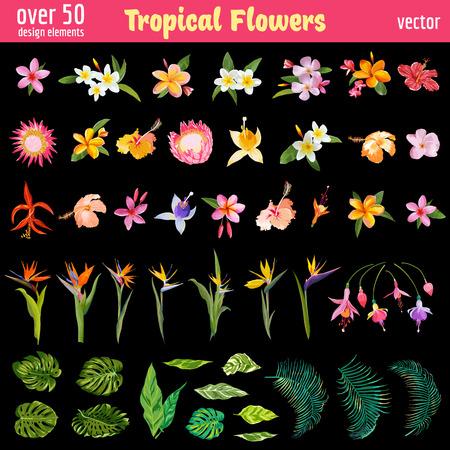 Las flores tropicales Deisgn Conjunto de elementos - colorido estilo de la vendimia - en el vector Ilustración de vector