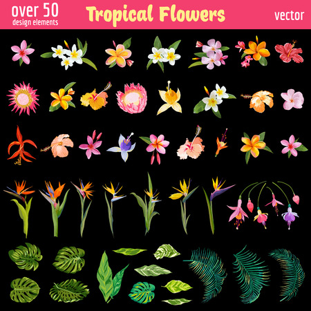 Tropical Flowers Deisgn Elements Set - Vintage Colorful Style  - in vector Illustration