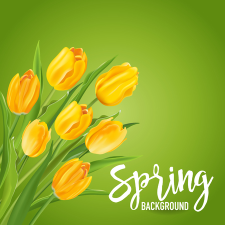 tulips in green grass: Spring Flower Background - with Tulips - in vector