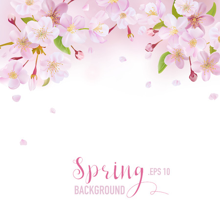 for text: Cherry Blossom Spring Background - with place for your Text - in vector
