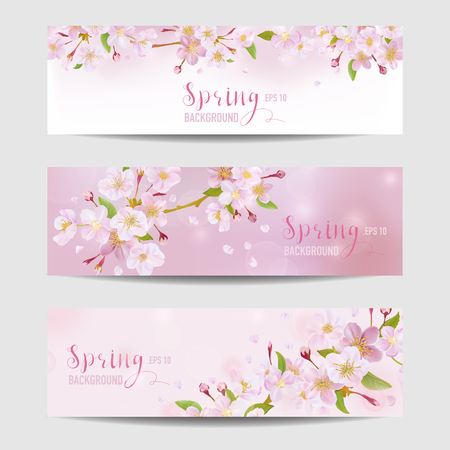 cherry blossom: Spring Flower Banner Set - Cherry Blossom Tree - in vector Illustration