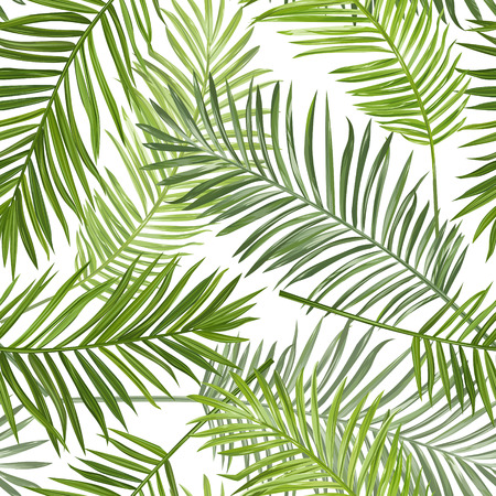 scrapbook element: Seamless Tropical Palm Leaves Background - for design, scrapbook - in vector