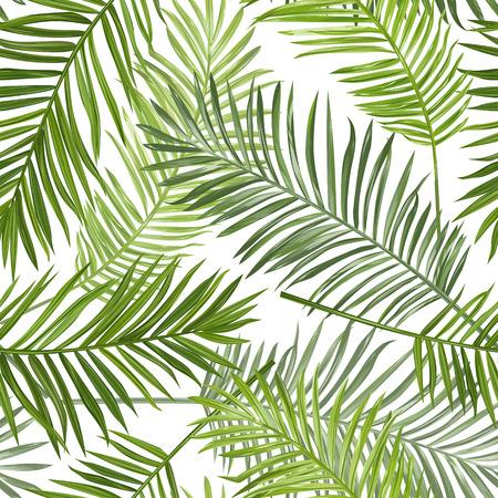 hojas parra: Sin fisuras tropical de la palma hojas de fondo - para el diseño, libro de recuerdos - en el vector Vectores