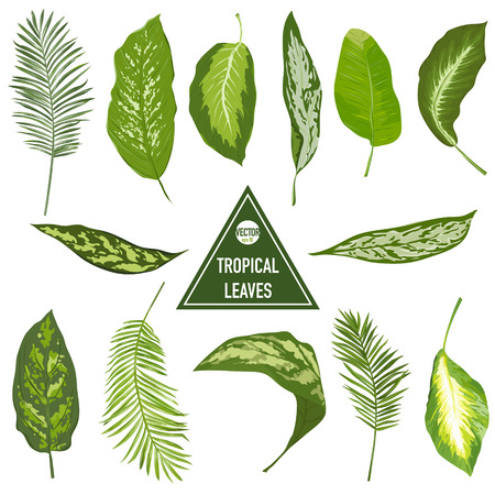 tropical leaves: Set of Tropical Leaves - for design elements, scrapbooking