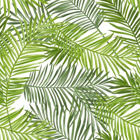Nahtlose Muster. Tropische Palmen-Blatt-Hintergrund. Vector Background. Standard-Bild - 54616817
