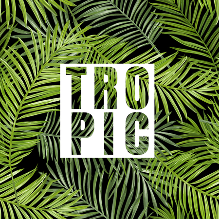 graphic background: Tropical Palm. Tropical Leaves Background. Vector Background. Exotic Graphic Background. Tropical Banner.