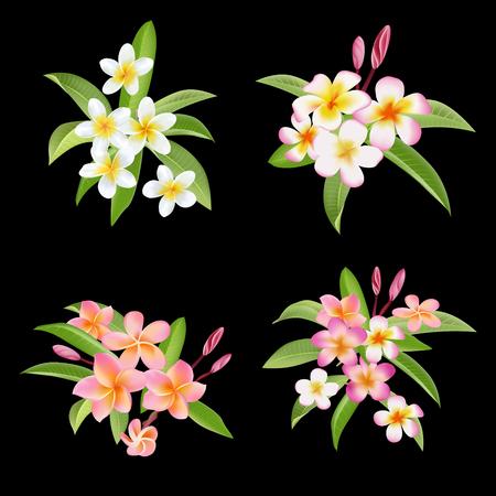 plumeria flower: Tropical Flowers and Leaves Set. Exotic Plumeria Flower. Vector Illustration