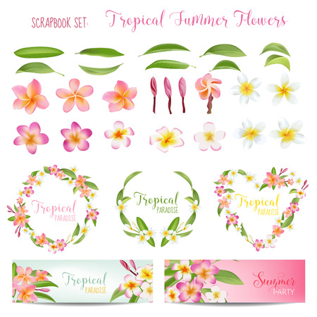 plumeria flower: Tropical Flowers and Leaves Set. Exotic Plumeria Flower. Floral Wreaths and Banners. Vector