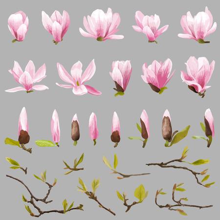 magnolia: Magnolia Flowers and Leaves Set. Exotic Flower. Vector Illustration