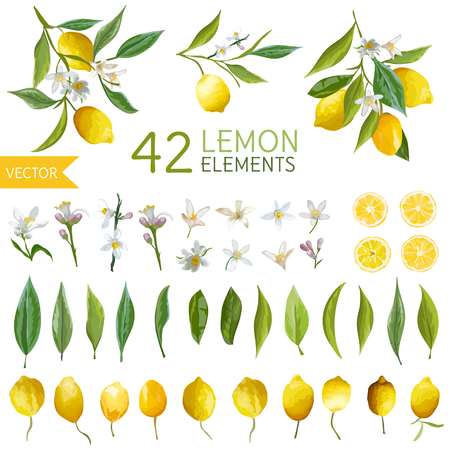 Vintage Lemons, Flowers and Leaves. Lemon Bouquetes. Watercolor Style Lemons. Vector Fruit Background.