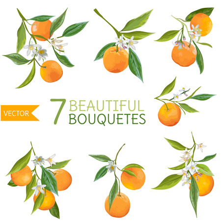 orange blossom: Vintage Oranges, Flowers and Leaves. Orange Bouquetes. Watercolor Style. Vector Fruit Background.