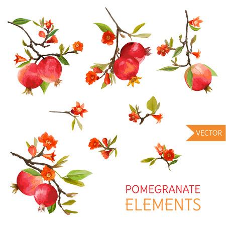 Melograni d'epoca, fiori e foglie. Acquerello stile Frutti. Vettore Vettoriali