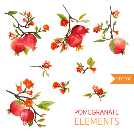 Vintage Pomegranates, Flowers and Leaves. Watercolor Style Fruits. Vector Çizim