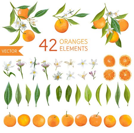 Vintage Oranges, Flowers and Leaves. Lemon Bouquetes. Watercolor Style Oranges. Vector Fruit Background. Illustration