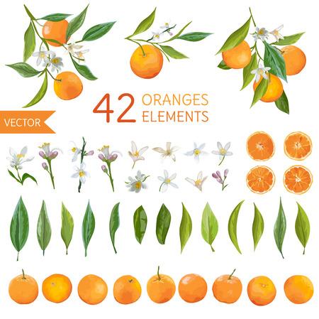Vintage sinaasappelen, bloemen en bladeren. Citroen-bouquetes. Aquarel stijl sinaasappels. Vector fruit achtergrond.
