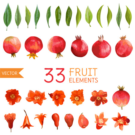 Vintage Pomegranates, Flowers and Leaves. Watercolor Style Fruits. Vector Illustration