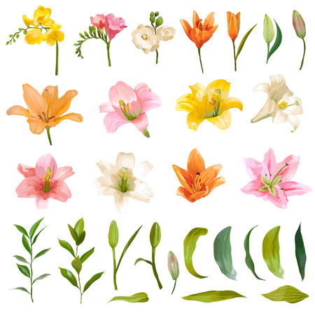 shabby: Vintage Lily and Rose Flowers Set - Watercolor Style - in vector Illustration