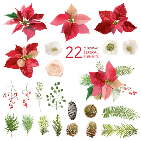 ポインセチア花とクリスマス花要素 - 水彩風で  イラスト・ベクター素材