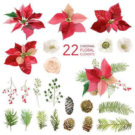 Poinsettia flores y los elementos florales de Navidad - en el estilo de la acuarela