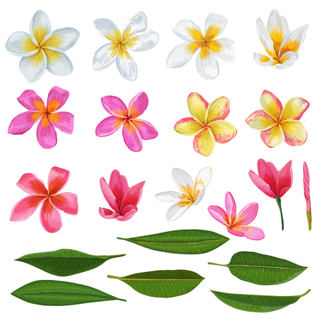 Plumeria Flowers and Leaves Set. Exotic Tropical Floral Elements for Decoration Vector illustration