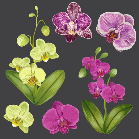 Exotic Orchid Flowers Set. Tropical Floral Elements for Decoration, Pattern, Invitation. Tropic Botanical Flowers Background. Vector illustration