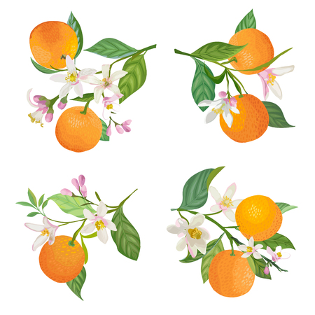 Watercolor Oranges hanging on branch with leaves and flowers for posters, summer citrus banners, cover design templates, social media stories, spring wallpapers. Vector illustration