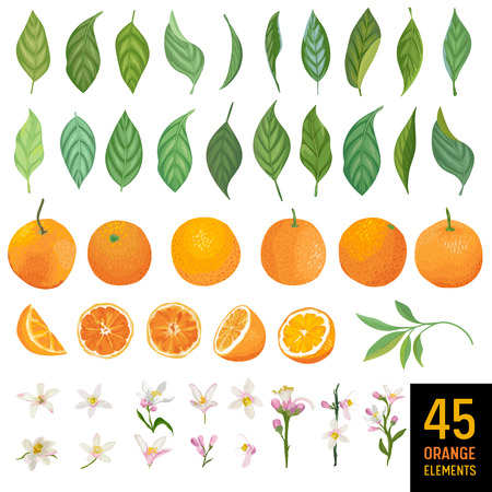 Watercolor elements of oranges, leaves and flowers for poster