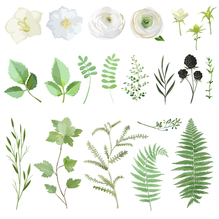 Vector illustration set of green leaves and flowers isolated on white background. Watercolor summer and spring plant collection. Botanical elements for wedding, cards, banners