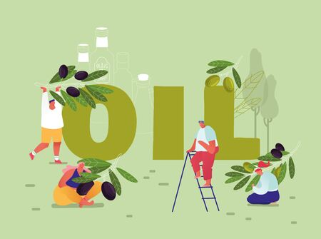 Pure Olive Oil Production and Using Concept. Male and Female Characters Gardening and Harvesting Ripe Olives for Cooking Oil and Cosmetics Poster Banner Flyer Brochure Cartoon Flat Vector Illustration