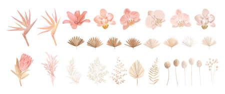 Elegant dry protea flower, tropic palm, pale orchid, eucalyptus, dried tropical leaves, floral elements