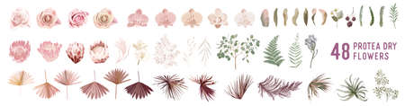 Dried pampas grass, rose, protea, orchid flowers, tropical palm leaves vector bouquets