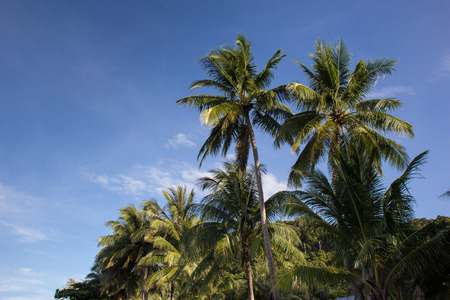 High coconut palm trees over sky background