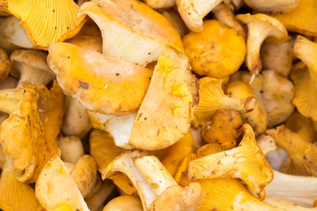 Fresh raw yellow chanterelle mushrooms abstract background Stock fotó