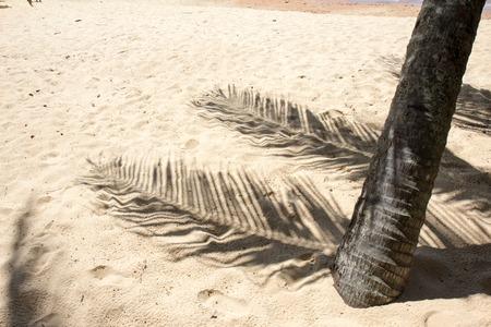 Palm tree shadows on sand of tropical beach