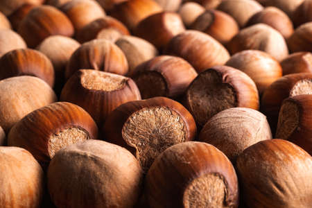 Ripe unpeeled hazelnuts as a background. Nuts as an antioxidant and protein source for ketogenic diet and vegetarianism. Macro photography. Front view.