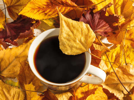 Bright yellow autumn leaf on the edge of the mug with hot steaming coffee. Cup with hot beverage among bright yellow and red leaves in the sunlight. Cozy fall concept. Top view. 免版税图像 - 159310163