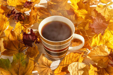 Large mug of hot steaming coffee among bright yellow and red autumn leaves in the sunlight. Cup with hot beverage for cozy fall mood concept. Top view.