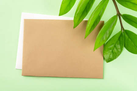 Blank brown paper card and fresh green leaves of eternity Zuzu plant or Zamioculcas zamiifolia on a pastel green background. Living green eco-friendly lifestyle. Copy space. Top view. 免版税图像