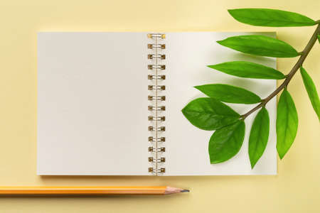 Blank open spring notepad, simple pencil and fresh green leaves of eternity Zuzu plant or Zamioculcas zamiifolia on a pastel yellow background. Living green eco-friendly lifestyle. Copy space. Top view.
