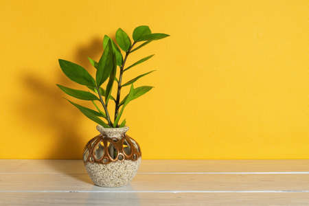 Fresh green stems of eternity Zuzu plant or Zamioculcas zamiifolia in a round ceramic vase cast shadow on a bright yellow background. Blank for greeting card design. Copy space. Front view.