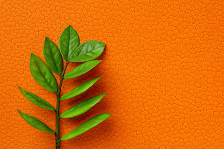 Zuzu plant or Zamioculcas zamiifolia fresh stem with green leaves on a bright orange textured backgrond.  Blank for greeting card design. Copy space. Top view.